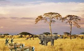 最美南非经典之旅8日游