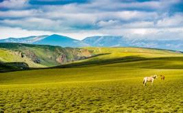 拉卜楞寺-桑科草原-甘加草原-达尔宗湖两日游